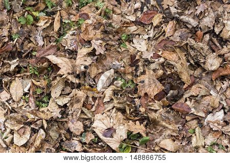 Colorful autumn leaves. green grass protruding from behind the leaves