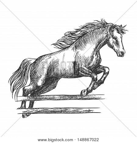 Strong horse runs and jumps over barrier. Trained mustang stallion on hippodrome sport horse races leaping over fence. Vector sketch
