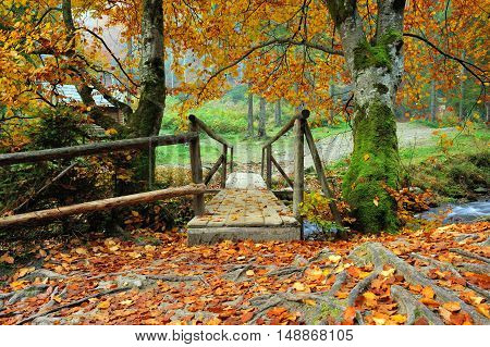 Old wooden bridge in the autumn forest