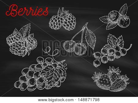 Berries chalk sketch icons on blackboard background. Vector chalked berry strawberry, blackberry, blueberry, cherry, raspberry, black currant, grape with leaves for cafe, restaurant menu board