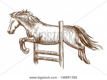 Wild horse runs and jumps over barrier. White stallion leaping over fence. Vector thin line sketch