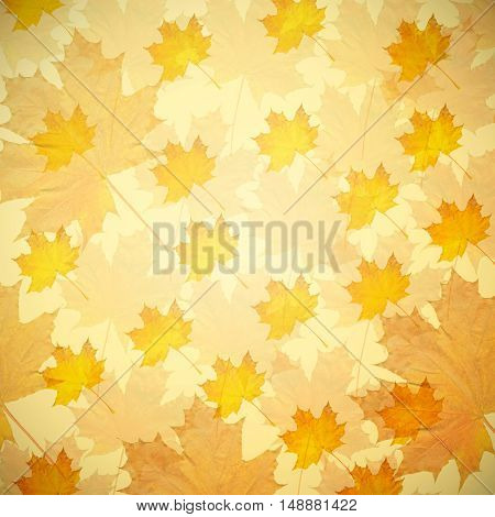 Abstract autumn background with yellow maple leaves