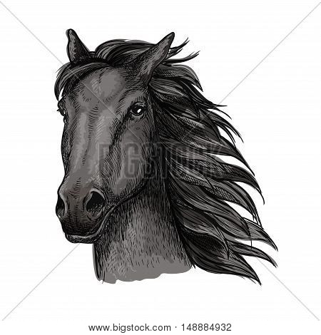 Black proud horse portrait. Dark raven mustang with wavy mane strands runs against wind with waving mane and shining eyes