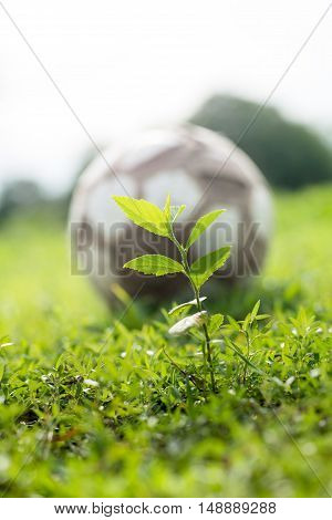 sprouts and foot ball on green grass nature concept.