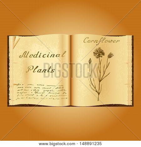 Cornflower. Botanical illustration. Medical plants. Old open book herbalist. Grunge background. Vector illustration