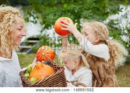 Children help harvesting Hokkaido pumpkins in autumn