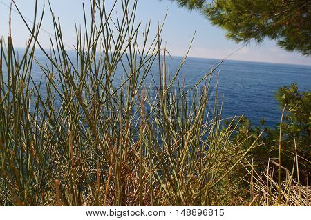 Prickly Grass Sparse Vegetation On Cliffs Against The Sea