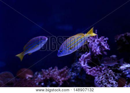 Fish swim near the reef in the aquarium.