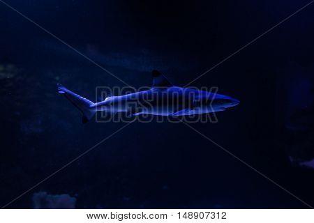 Scary shark floats on the ocean floor.