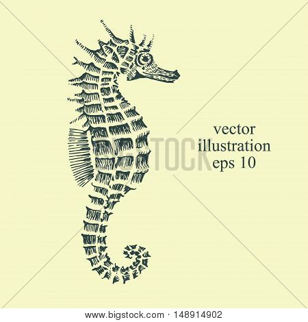 Natural hand drawn illustration of sea horse. Hand drawn