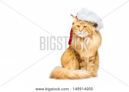 Big ginger maine coon cat in christmas santa cap. Isolated on white background. Copy space.