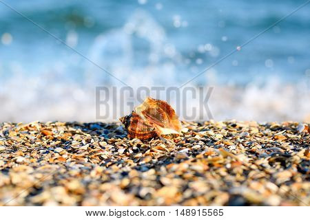 Wave of blue ocean or sea on sandy beach and beautiful marine shell. Sea background.  Sea beach sand relaxation landscape viewpoint for design postcard and calendar