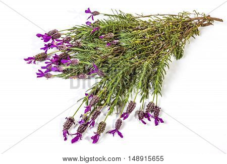 Isolated Bunch Of Flowering Purple Lavender Plant Stems