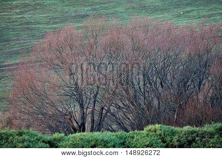 Views of rural Tasmania in farming country with detail of trees