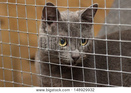 Cat in jail and looks count toward