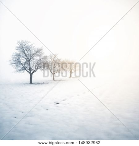 Winter scene in a field with trees