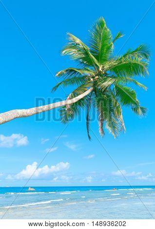 Exotic Paradise Serenity Shore