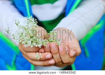 Small white flowers in children's hands. Close up