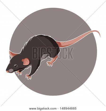 Vecor image of the Isometric rat icon