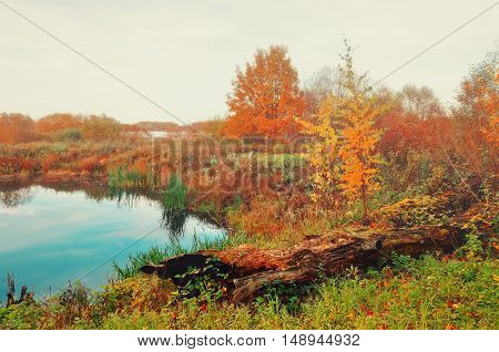 Foggy autumn landscape in pale colors - blue autumn river overgrown with reeds in foggy weather. Autumn cloudy landscape of autumn nature with yellowed autumn trees along the forest autumn river