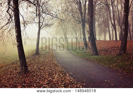 Autumn landscape - city park alley with bare autumn trees and dry autumn fallen red leaves on the ground in autumn foggy day. Autumn landscape in vintage colors with autumn deserted alley in the fog
