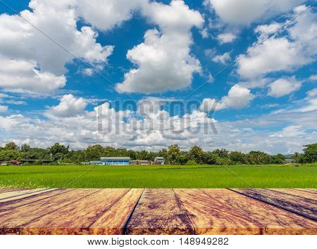Image Of Rice Field And Blue Sky .