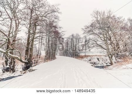 Forest Trail With Snow In The Winter