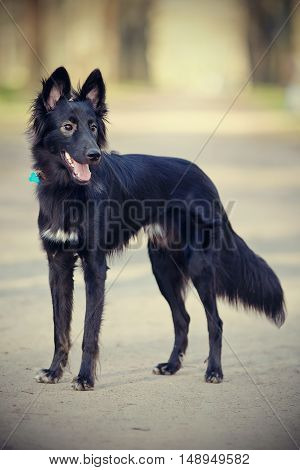 Black not thoroughbred dog on walk in park.