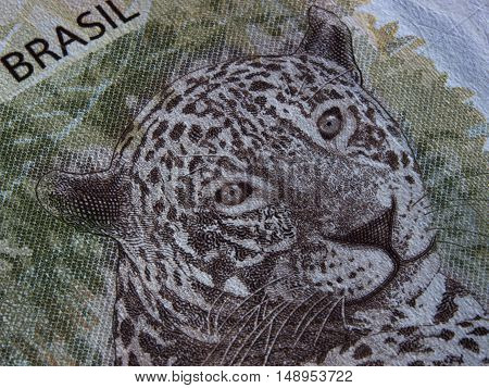 Close-up of brazilian currency notes animal face real