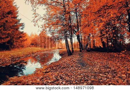 Autumn bright forest landscape with autumn trees and narrow forest river in cloudy weather. Autumn forest landscape view of orange autumn trees and dry fallen autumn leaves. Cloudy autumn landscape