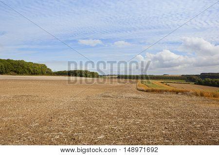 Farming Landscape With Mackerel Sky