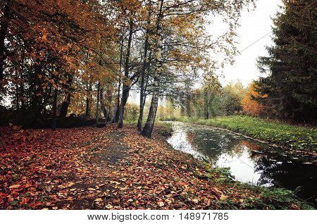 Autumn mysterious landscape in vintage colors-autumn trees and narrow forest river in cloudy weather.Autumn forest landscape-orange autumn trees and dry fallen autumn leaves. Vintage autumn landscape