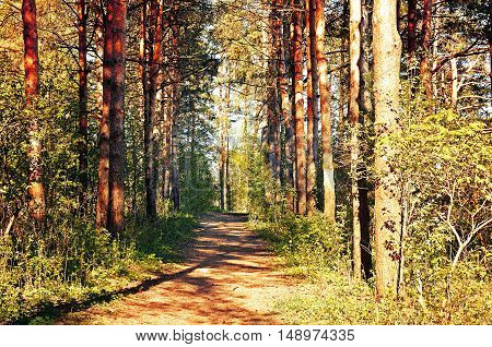 Autumn colored natural landscape - autumn forest in autumn sunny evening at the sunset. Bright view of sunny autumn nature with yellowed autumn trees.