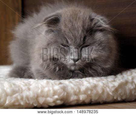 Grey fluffy cat cozy sleeps on a mat on the floor