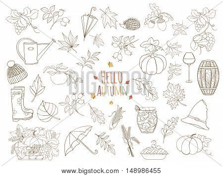 Set of autumn elements can be used for can be used for print or website Design elements of rubber boots hat grapes vine glass wine cask jam watering can umbrella jam spikelet and various autumn leaves