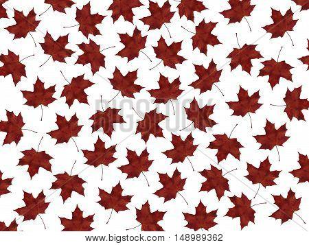 Autumn maple leaves nature background textures season foliage