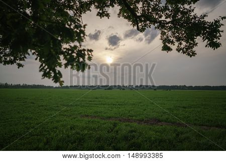 oak and maple tree couple on summer field at sunny evening, summertime