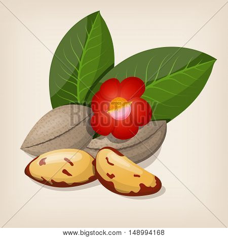 Brazil nuts with flowers and leaves. Vector illustration.