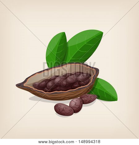 Cacao pods and beans with leaves. Vector illustration.