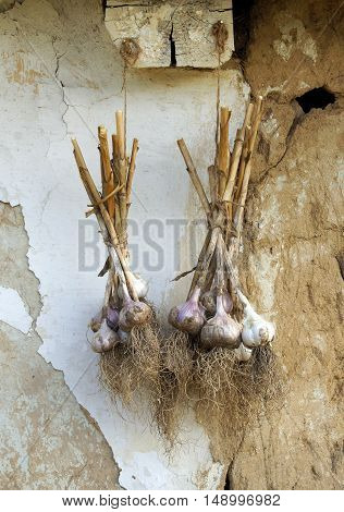 Bunches of garlic on a background of the old house wall