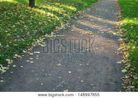autumn alley ground level closeup photo, shallow focus