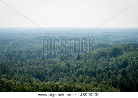 Panoramic View Of Misty Forest. Far Horizon