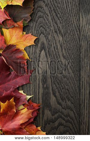 maple fall leaves on oak table border photo, copy space