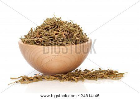 Honeysuckle Flower Herb