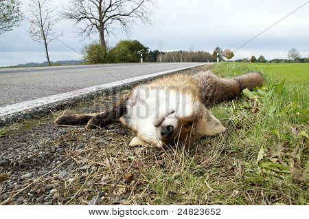 Roadkill Fox