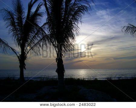 Palm Twilight