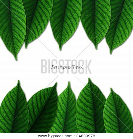 beautiful lush green leaf