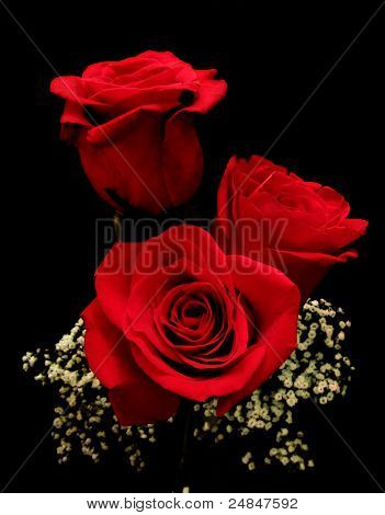 Three Red Rose