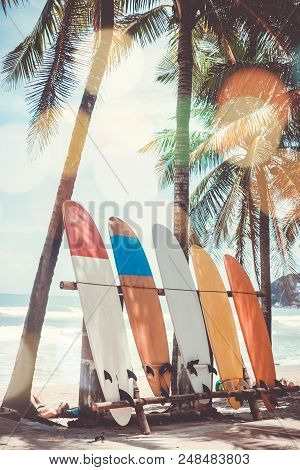 Many Surfboards Beside Coconut Trees