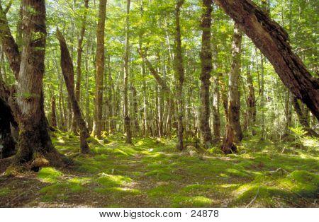 Summer Forest Scene